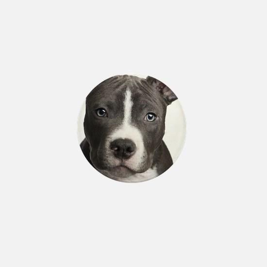Pitbull Lovers Mini Button