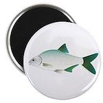 European Freshwater Bream Magnets