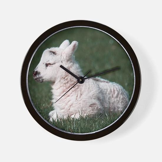baby sheep Wall Clock