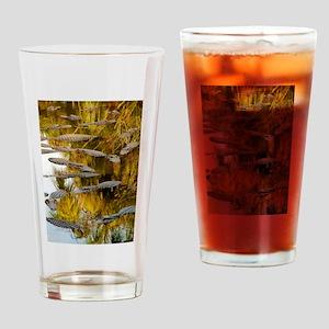 GATORS PHOTO Drinking Glass