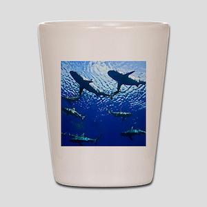 Sharks Underwater Shot Glass