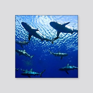 "Sharks Underwater Square Sticker 3"" x 3"""