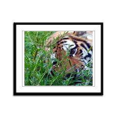 Tiger Eyes Framed Panel Print