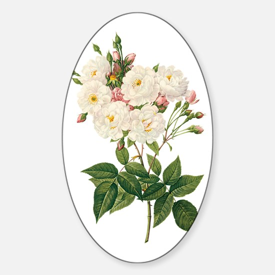 Vintage Blush Noisette Rose Redoute Sticker (Oval)