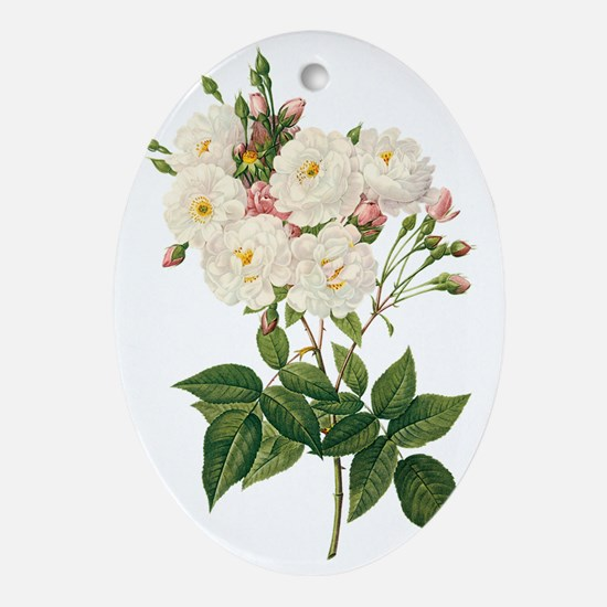 Vintage Blush Noisette Rose Redoute Oval Ornament