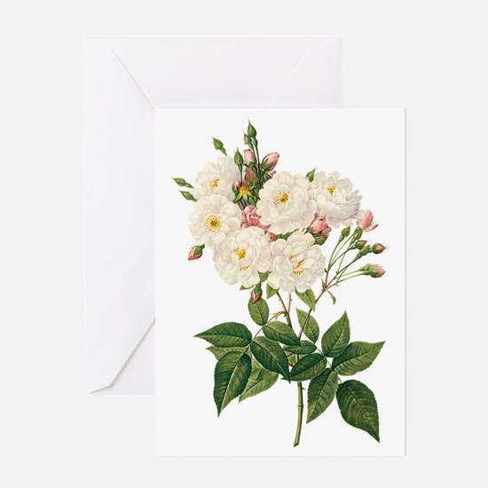 Vintage Blush Noisette Rose Redoute Greeting Card