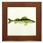 Zander pike perch Framed Tile