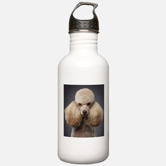 Beautiful mini poodle Water Bottle