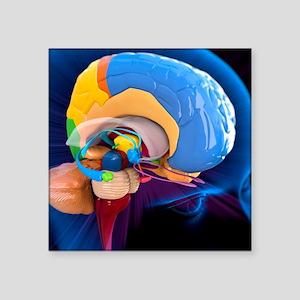 "Human brain anatomy, artwor Square Sticker 3"" x 3"""
