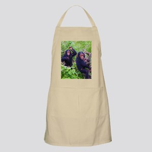 Two Chimps Playing Apron