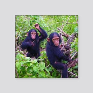 "Two Chimps Playing Square Sticker 3"" x 3"""