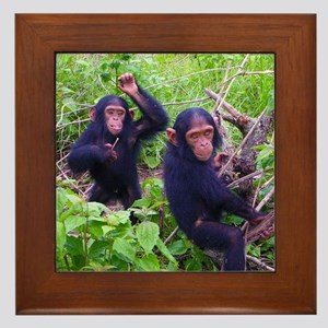 Two Chimps Playing Framed Tile