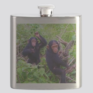 Two Chimps Playing Flask