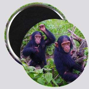 Two Chimps Playing Magnet