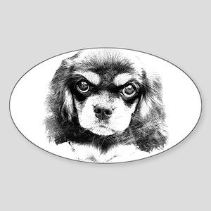 Cavalier King Charles Spaniel, Black and Tan Puppy