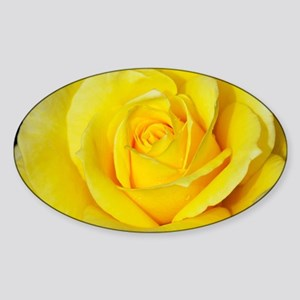Beautiful single yellow rose Sticker (Oval)