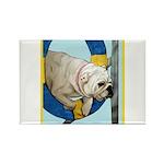 Bulldog Agility Design Rectangle Magnet (100 pack)
