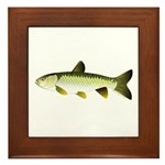 Grass Carp Framed Tile