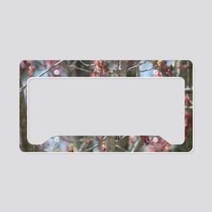 RBG14.7x9.67 License Plate Holder