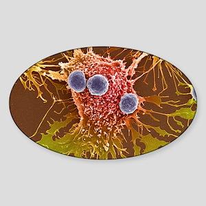 T lymphocytes and cancer cells, SEM Sticker (Oval)