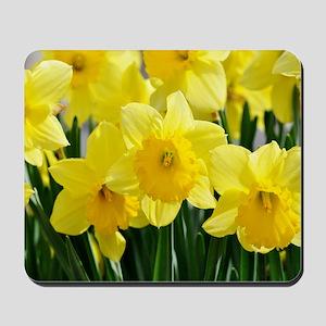 Trumpet Daffodil Mousepad