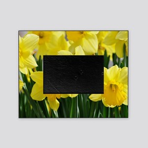 Trumpet Daffodil Picture Frame