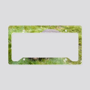 Wombat License Plate Holder