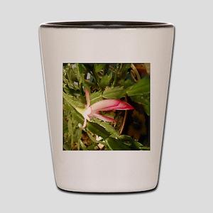 Christmas Cactus Shot Glass