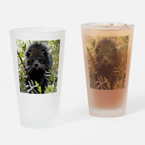 004Bearcat Drinking Glass