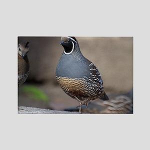 quailcalendarprint Rectangle Magnet