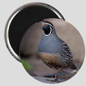 quailcalendarprint Magnet