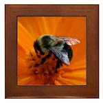 Bumblebee on Marigold Framed Tile