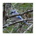 Blue Jay in Apple Tree Tile Coaster
