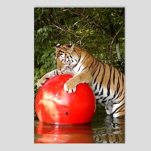 Tiger_Aroara050 Postcards (Package of 8)