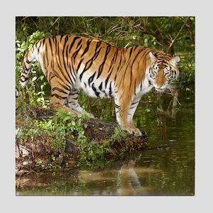 Tiger_Aroara058 Tile Coaster