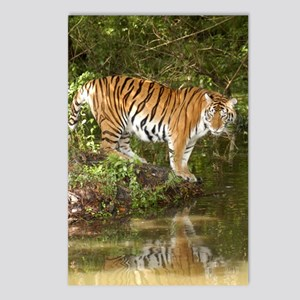 Tiger_Aroara058 Postcards (Package of 8)