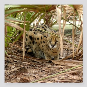 "serval 006 Square Car Magnet 3"" x 3"""