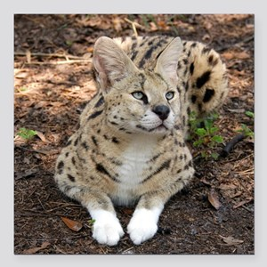 "serval 002 Square Car Magnet 3"" x 3"""