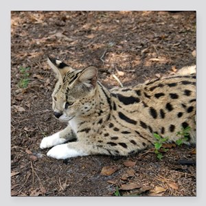 "serval 001 Square Car Magnet 3"" x 3"""