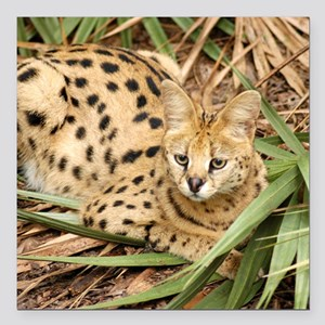 "serval 007 Square Car Magnet 3"" x 3"""