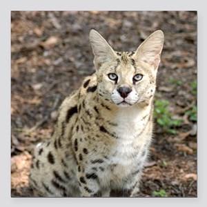"serval 004 Square Car Magnet 3"" x 3"""