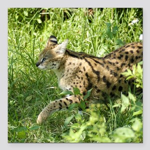 "serval 009 Square Car Magnet 3"" x 3"""