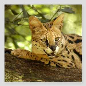 "serval 010 Square Car Magnet 3"" x 3"""