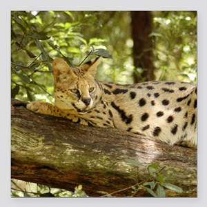 "serval 011 Square Car Magnet 3"" x 3"""