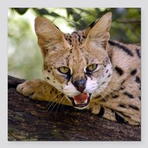 "serval 013 Square Car Magnet 3"" x 3"""