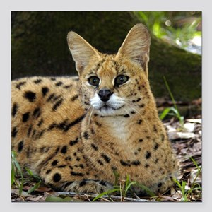 "serval 015 Square Car Magnet 3"" x 3"""