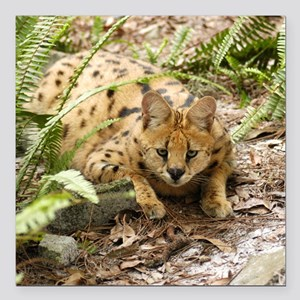 "serval 019 Square Car Magnet 3"" x 3"""