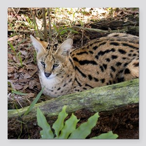 "serval 021 Square Car Magnet 3"" x 3"""