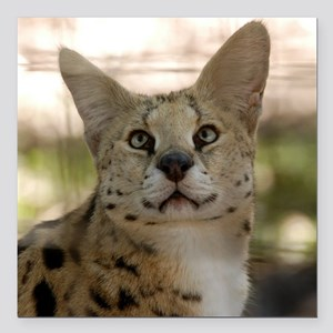 "serval 017 Square Car Magnet 3"" x 3"""