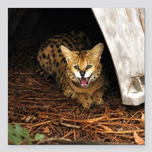 "serval 016 Square Car Magnet 3"" x 3"""